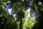 Borneo rainforest -- sabah_3436