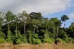 Rainforest along the Kinabatangan river -- sabah_3502