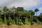 Rainforest along the Kinabatangan river -- sabah_3502