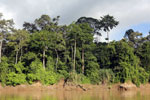 Rainforest along the Kinabatangan river -- sabah_3503