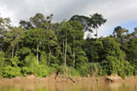 Rainforest along the Kinabatangan river -- sabah_3504