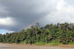 Rainbow over the Borneo rainforest -- sabah_3511