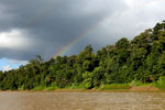 Rainbow over the Borneo rainforest