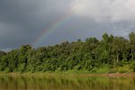Rainbow over the Borneo rainforest -- sabah_3517