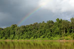 Rainbow over the Borneo rainforest -- sabah_3518