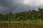Rainbow over the Borneo rainforest -- sabah_3519