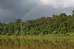 Rainbow over the Borneo rainforest -- sabah_3520