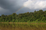Rainbow over the Borneo rainforest -- sabah_3521