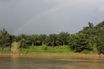 Rainbow over an oil palm plantation in Borneo -- sabah_3527