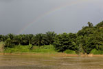 Rainbow over an oil palm plantation in Borneo -- sabah_3528