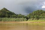 Oil palm plantation -- sabah_3530