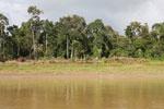 Structure along the Kinabatangan river