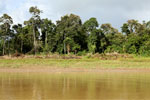 Structure along the Kinabatangan river -- sabah_3532