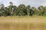 Structure along the Kinabatangan river -- sabah_3533