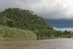 Rainforest above the Kinabatangan river -- sabah_3535