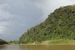 Rainforest above the Kinabatangan river -- sabah_3540