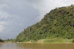 Rainforest above the Kinabatangan river -- sabah_3541