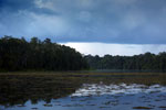 Oxbow lake in Borneo -- sabah_3571