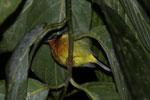 Sleeping bird -- sabah_3576