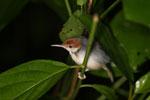 Bird -- sabah_3650