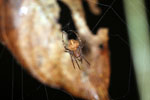 Spider -- sabah_3651