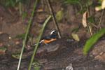 Bird -- sabah_3674