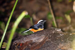Bird -- sabah_3675
