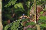 Bird -- sabah_3738