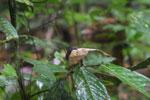 Bird -- sabah_3742