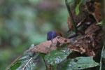 Bird -- sabah_3743