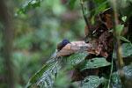 Bird -- sabah_3744