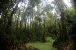 Peat swamp -- sabah_3749