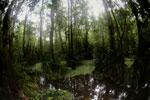 Peat swamp -- sabah_3750