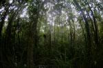 Peat swamp -- sabah_3755