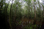 Peatswamp