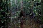 Peatswamp -- sabah_3761