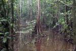 Peat swamp -- sabah_3762