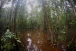 Peat swamp -- sabah_3764