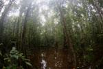 Peat swamp -- sabah_3766