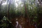 Peat swamp -- sabah_3767