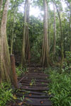 Boardwalk through a peatswamp in Borneo -- sabah_3770