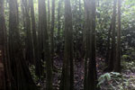 Peat swamp -- sabah_3775