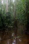Peat swamp -- sabah_3777