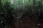 Peat swamp -- sabah_3778