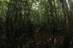 Peat swamp -- sabah_3783