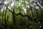 Peat swamp in Borneo