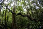 Peat swamp in Borneo