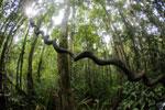 Peat swamp in Borneo -- sabah_3790