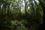 Peat swamp -- sabah_3792