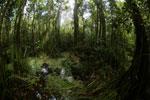 Peat swamp -- sabah_3793